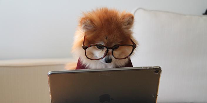 Chien qui regarde à un ordinateur portable