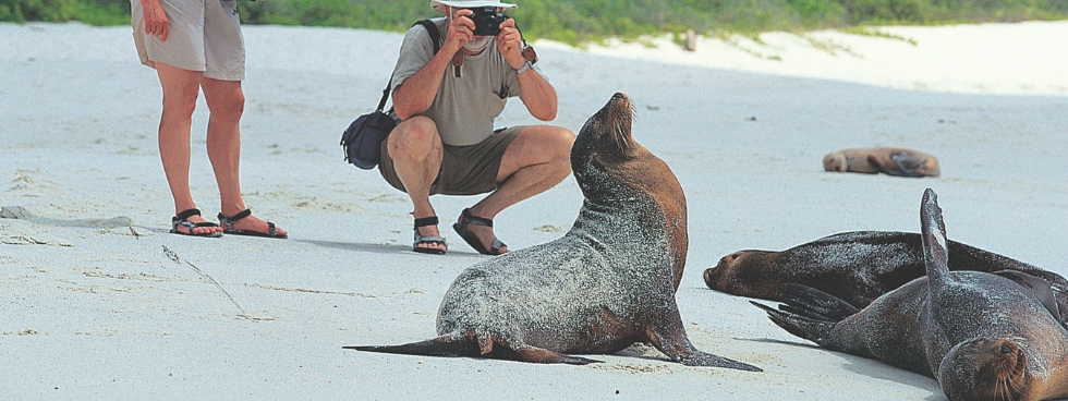 older couple on a beach taking photos of happy seals on a sunny day
