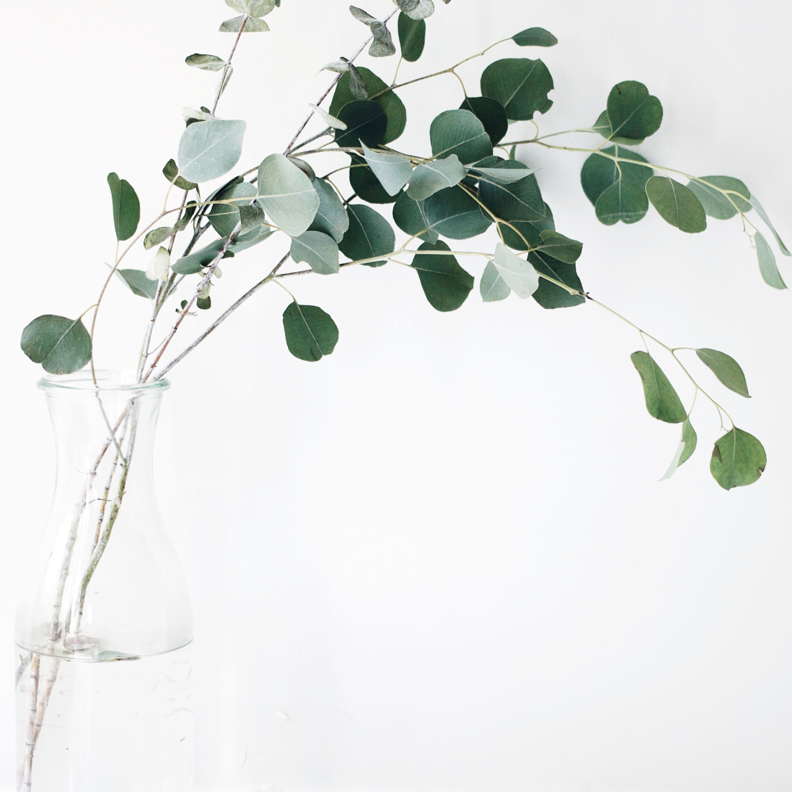 Green plant leaves in a vase