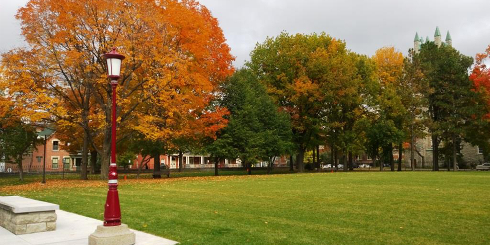 Tabaret lawn in the fall