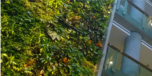 The Green Wall at the Faculty of Social Sciences