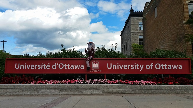 La mascotte Gee-Gee assis sur une enseigne extérieure de l'Université d'Ottawa.