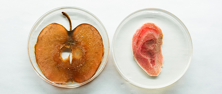 oreille de pomme échantillon.