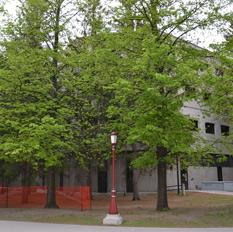 Trees at Lamoureux Hall before being removed.