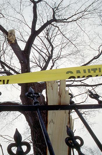 Le verglas a endommagé de nombreux arbres.