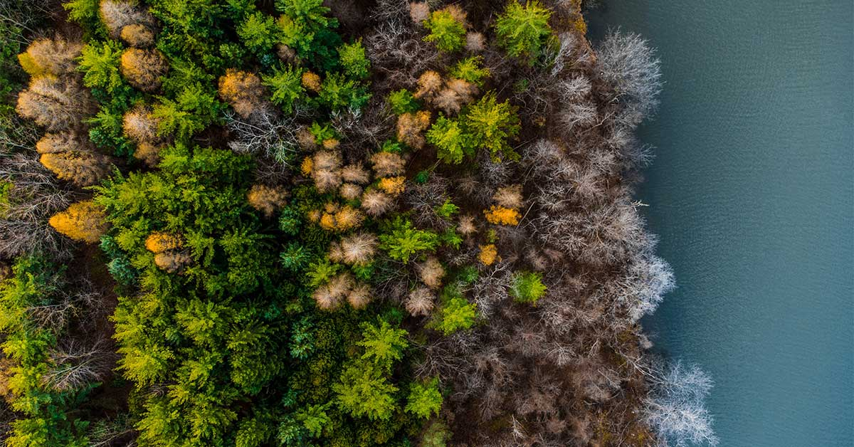Une perspective à vol d'oiseau d'arbres verts et jaunes