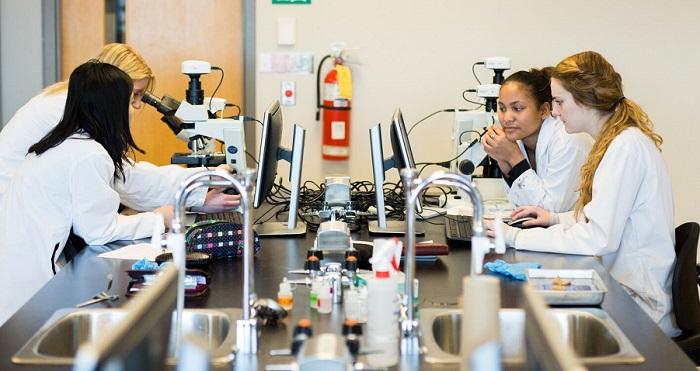Quatre étudiantes travaillent ensemble dans un laboratoire