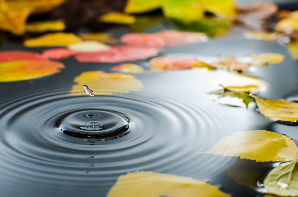 Rippled water with floating autumn leaves