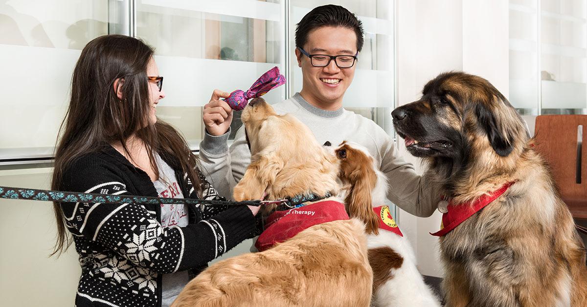 Deux étudiants jouent avec trois chiens.