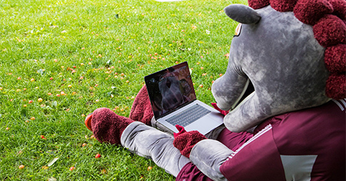 The GeeGee mascot consulting the new website on a computer