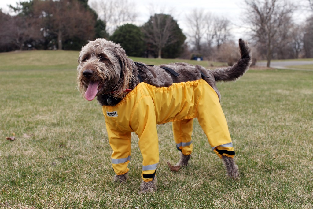 "Dog wearing four-legged ""pants"""