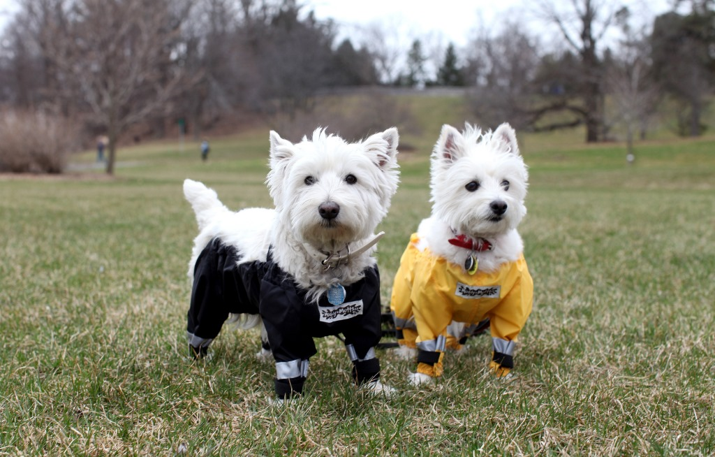 "Dogs wearing four-legged ""pants"""