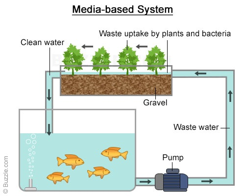 Schéma du système aquaponique proposé pour le projet Growcer