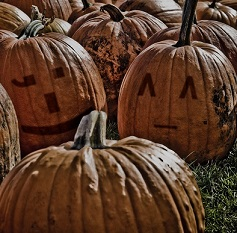 Many pumpkins assembled on some grass. Two have painted faces and all with warts.
