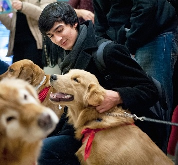Young man petting one of three dogs.