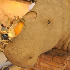 Head of a rhinoceros — without its horn — is mounted to a wall.