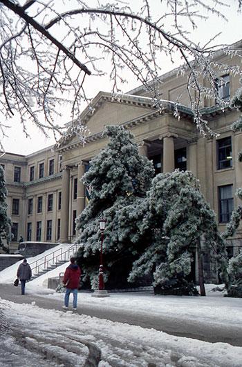 Des arbres ploient sous la glace devant le pavillon Tabaret.