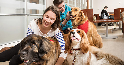 Two people petting and smiling with three dogs.
