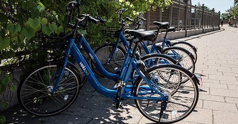 Bicyclettes VeloGO stationnées près d'un parc.