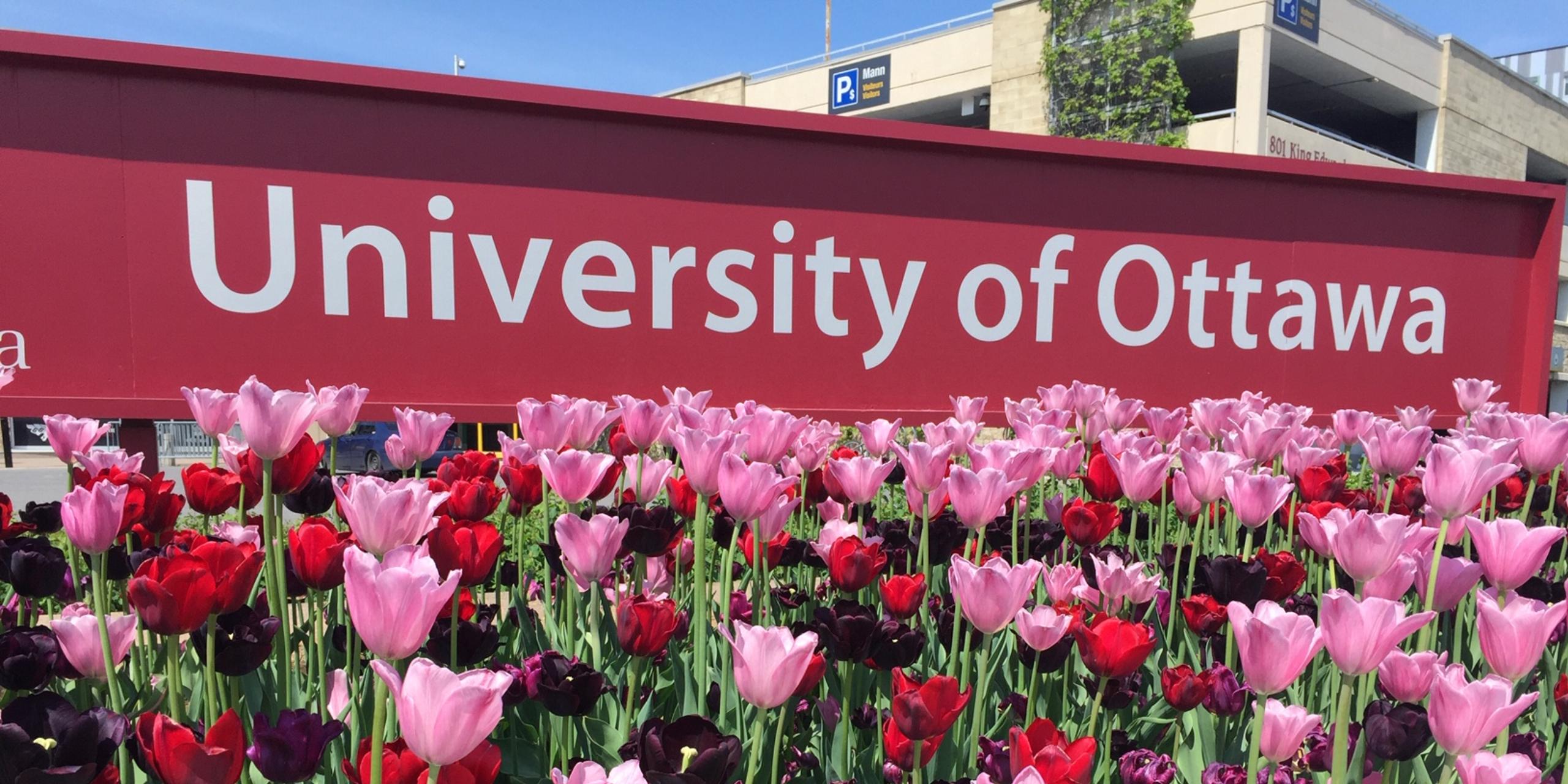 image du sign uottawa derrière les tulipes