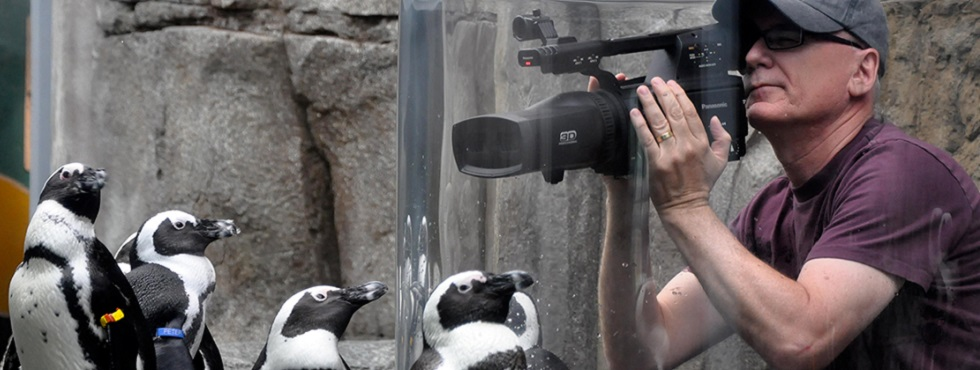Randall Dark filming penguins in 3D