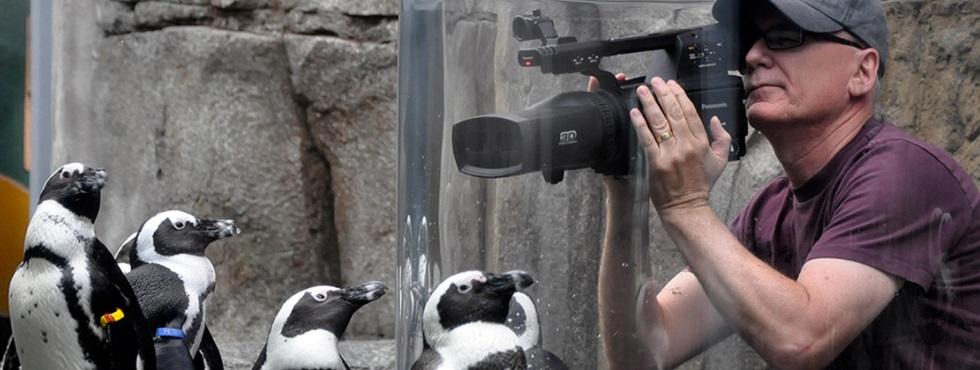 Randall Dark filmant des pingouins en 3D.